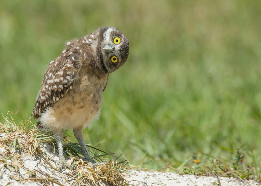 ThinkstockPhotos 527564619 1024x731 - 17 Fascinating Owl Facts