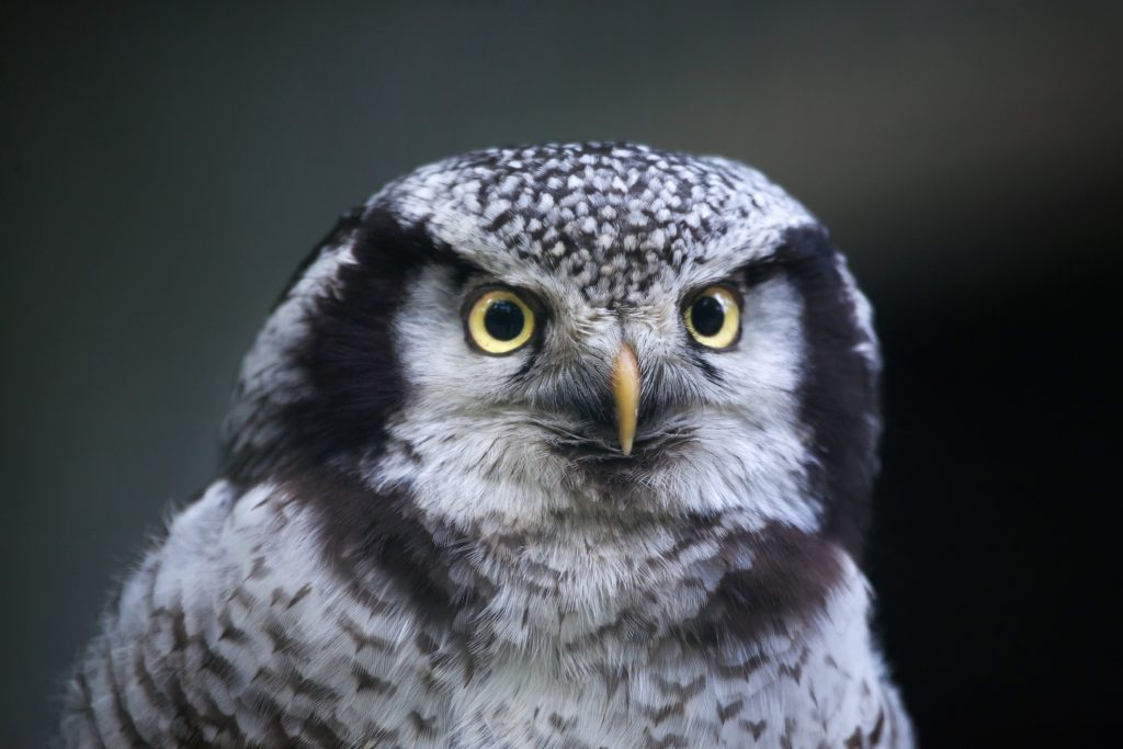 ThinkstockPhotos 589977524 1024x683 - 17 Fascinating Owl Facts