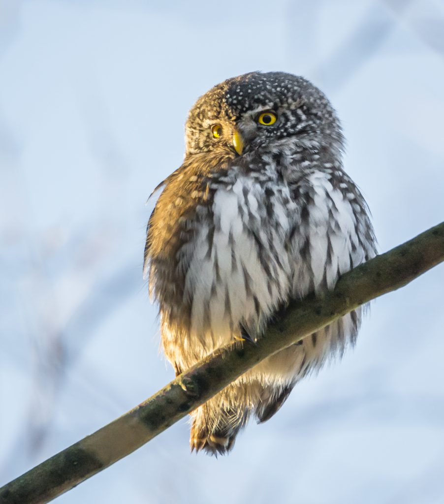 ThinkstockPhotos 639917496 902x1024 - 17 Fascinating Owl Facts