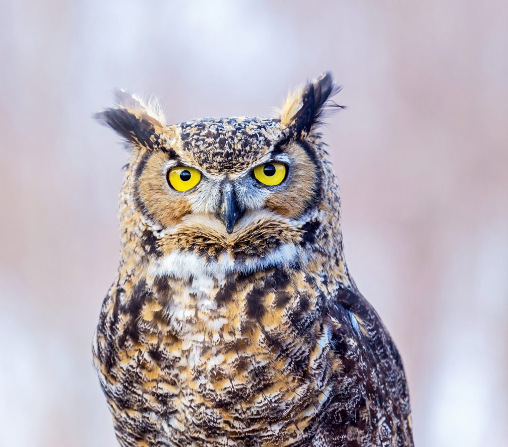 ThinkstockPhotos 678689860 1024x900 - 17 Fascinating Owl Facts