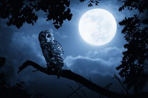 ThinkstockPhotos 182256667 300x200 - Why Are There So Many Night Owl Songs?